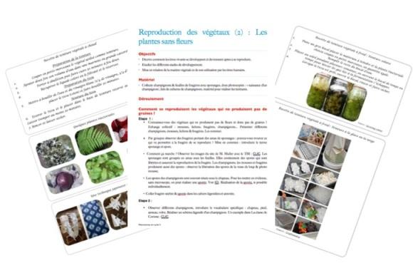 reproduction-plantes-sans-fleurs